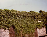 North wall of the old  winery