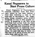 Kanai Nagasawa to start prune culture