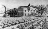 Fountaingrove winery, 1891