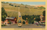 Fountaingrove Vineyard, Santa Rosa, Calif.