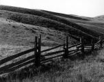 Fenceline, Western Sonoma County, California